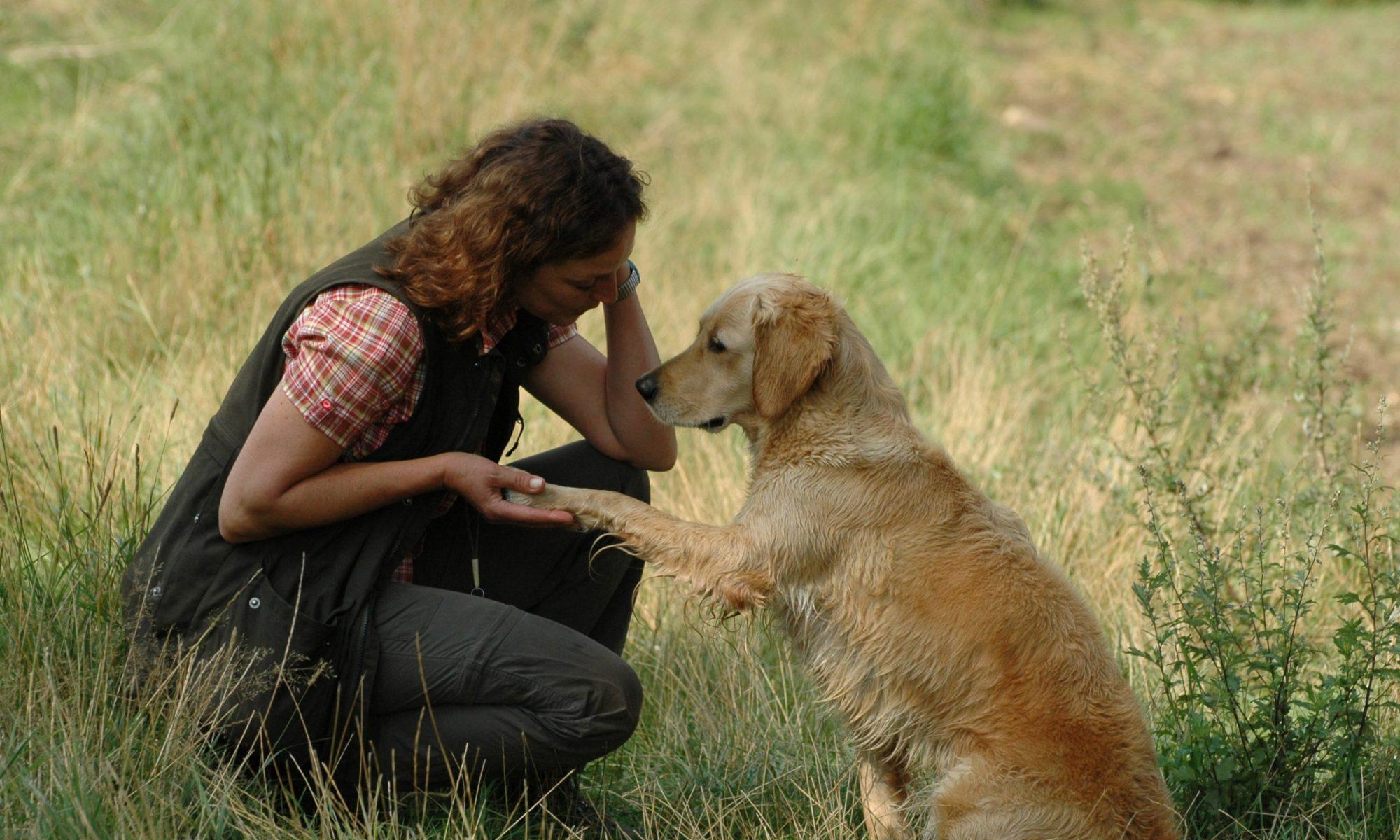 SH-Hundetraining